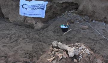 Imagen de Mar Chiquita: hallan restos de un gliptodonte juvenil, del que existen pocos registros en el mundo