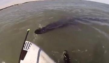 Imagen de Video: ballenas sorprenden a un joven que las filmaba desde un kayak en Monte Hermoso