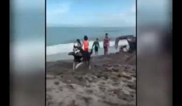 """Imagen de Mirá en acción al perro """"roba ojotas"""" que ya es furor en las playas de Santa Clara"""