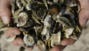 Imagen de Qué es y cómo ataca la bacteria del mar que mató a un hombre en Uruguay