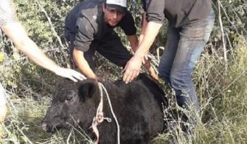 Imagen de Volcó un camión con terneros en Luján y los carnearon en la ruta