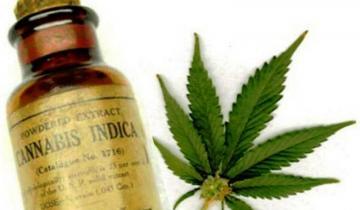 Imagen de La Defensoría del Pueblo pidió que se amplíe la entrega gratuita de aceite de cannabis para tratar más enfermedades