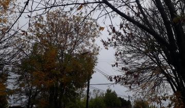 Imagen de Diez evacuados y caída de árboles y postes por un temporal de viento y lluvia en Mar del Plata