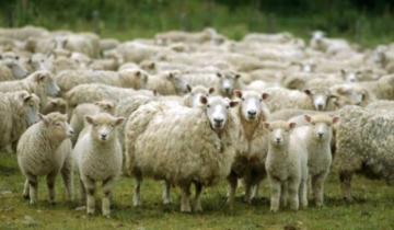 Imagen de General Lavalle: continúa abierta la convocatoria para presentar proyectos productivos ovinos