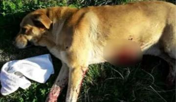 Imagen de Indignación en Dolores: un hombre apuñaló a un perro