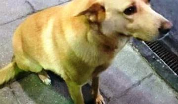 Imagen de Mar del Tuyú: ató a un perro a su camioneta y lo arrastró hasta matarlo