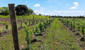 Imagen de Dolores: avanza un proyecto de producción vitivinícola