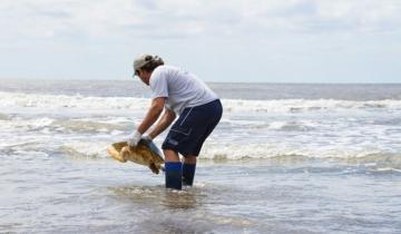 Imagen de El emocionante regreso al mar de dos tortugas cabezonas en San Clemente del Tuyú
