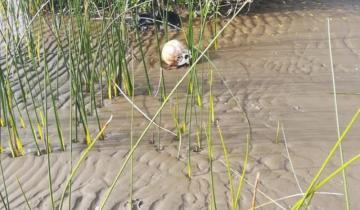 Imagen de Amplio operativo: encontraron restos humanos en una playa de Punta Lara