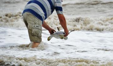 Imagen de San Clemente: una tortuga de 35 cm que expulsó 1,2 metros de plástico pudo volver al mar