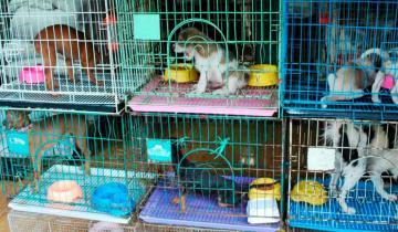 Imagen de La Defensoría de la Provincia pide que se prohíba la exposición de animales en vidrieras