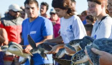 Imagen de Seis tortugas marinas regresaron al mar