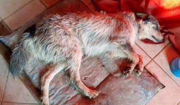 Imagen de Vendió la Play 3 para pagar la operación de su perra que había sido atropellada