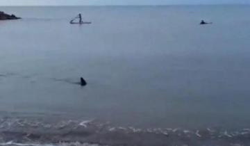 Imagen de Alerta en Santa Clara del Mar: apareció un tiburón nadando cerca de la orilla