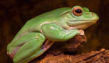 Imagen de Casi el 40% de los anfibios está en peligro de extinción
