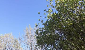 Imagen de Llega la primavera: cómo estará el tiempo en la región en la última semana de invierno