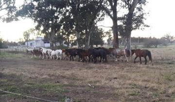 Imagen de La Policía Rural de Dolores secuestró 20 caballos