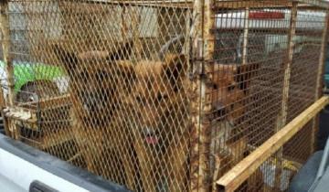 Imagen de Fuerte multa al dueño de los perros que atacaron a dos mujeres en Mar del Plata