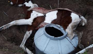Imagen de Video: rescatan a un caballo que había caído en un pozo en Villa Gesell