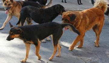 Imagen de Hay más de 6 millones de perros y gatos sin vacunar en las calles de la Provincia