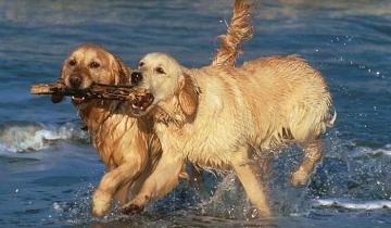 Imagen de Tres perros atacaron a una mujer mientras corría por la playa