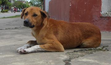 Imagen de Crueldad sin límites: donaron alimento envenenado a refugios y mataron más de 20 perros