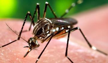 Imagen de Son 101 los contagios de dengue en La Plata en lo que va del año