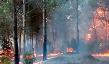 Imagen de Voraz incendio en Cariló: bomberos de la región trabajan para sofocar las llamas
