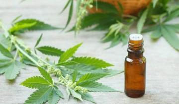 Imagen de Tiene esclerosis múltiple y pide que le aprueben el uso de aceite de cannabis