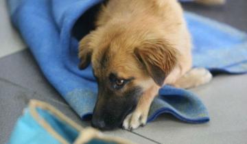 Imagen de Este jueves se realizarán castraciones caninas gratuitas en Mar de Ajó