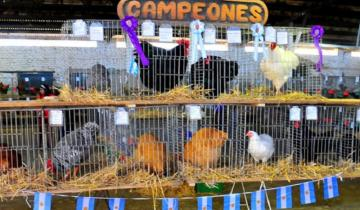 """Imagen de En Ayacucho se desarrolla la 3ª Exposición Avícola """"Al sur del Salado"""""""