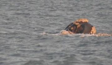 Imagen de Avistaje de una ballena frente a la costa de Mar Azul
