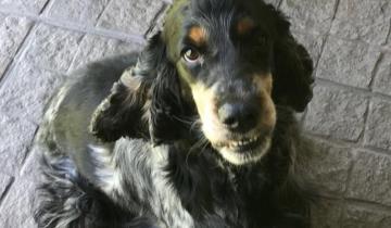 Imagen de Ofrecen 15 mil pesos de recompensa para el que encuentre a un perro