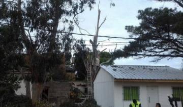 Imagen de Falleció el hombre que se cayó mientras podaba un árbol