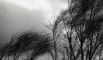 Imagen de Alerta meteorológico por vientos intensos con ráfagas en el este y el sur de la Provincia