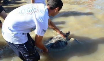 Imagen de Final feliz: la tortuga que expulsó 14 gramos de plástico volvió al mar