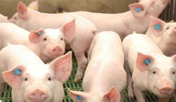 Imagen de Alerta: más de 30 intoxicados en Balcarce por comer embutidos de cerdo en mal estado