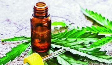 Imagen de Aprobaron el cultivo y uso terapéutico de cannabis en Castelli