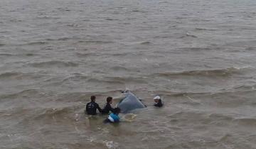 Imagen de El emotivo rescate a una ballena varada y atrapada en una red de pesca