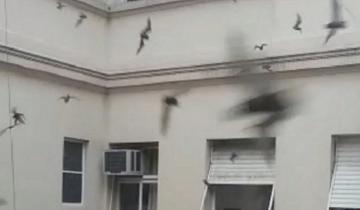 Imagen de Insólito: la Municipalidad de General Madariaga, invadida por murciélagos
