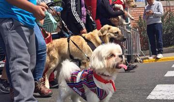 Imagen de Se realizará una singular caminata con mascotas en La Costa