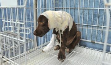 Imagen de A pocas horas del Día del Animal despellejaron a una perra y lucha por su vida