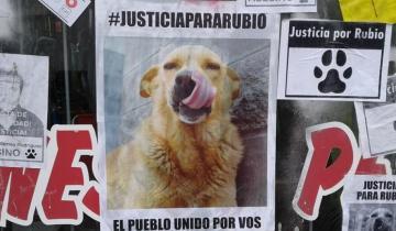 Imagen de Ya suman más de 100 mil firmas para pedir justicia por Rubio, el perro asesinado en Mar del Tuyú