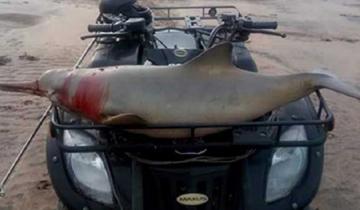 Imagen de Denuncian que cazaron a un delfín y lo pasearon herido en un cuatriciclo por la playa