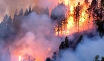 Imagen de Declararon la emergencia ambiental por incendios forestales en el Amazonas