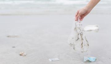 Imagen de Medio ambiente: apareció un delfín muerto en Costa del Este y encontraron restos de una bolsa plástica en su estómago