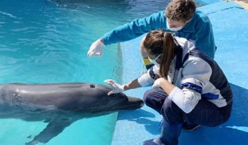 Imagen de Mundo Marino: cómo se garantiza el bienestar de los animales durante la pandemia