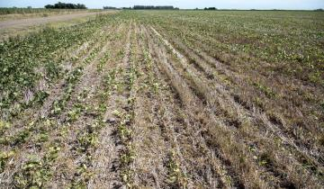 Imagen de Se declaró el estado de emergencia agropecuaria en 12 distritos bonaerenses