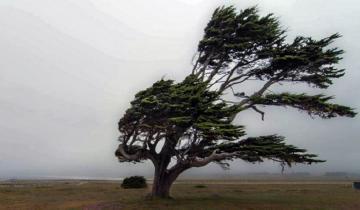 Imagen de Rige un alerta meteorológico por vientos fuertes con ráfagas en la Región