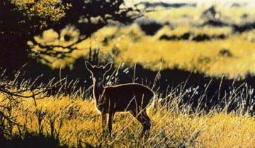 Imagen de Por qué hoy es el Día de los Parques Nacionales